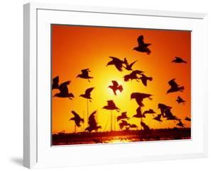 Seagulls at St. Kilda, Sunset, Melbourne, Victoria, Australia by John Banagan