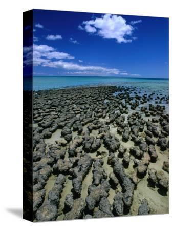 Stromatolites in Hamelin Pool, Near Monkey Mia, Hamelin Bay, Australia