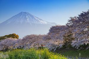 Mount Fuji, 3776m, UNESCO World Heritage Site, Yamanashi Prefecture, Honshu, Japan, Asia by John Baran
