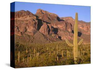 Arizona, Organ Pipe Cactus National Monument by John Barger