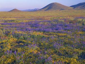 California, Carrizo Plain National Monument by John Barger