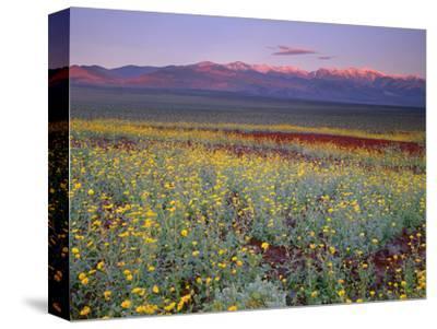 California, Death Valley National Park