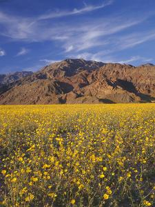 California, Death Valley National Park by John Barger