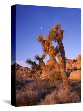 California, Joshua Tree, Moon and Monzonite Granite Boulders, Early Morning Near Jumbo Rocks