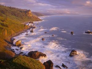 California, Redwood National and State Parks by John Barger