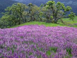 California, Redwood National Park by John Barger