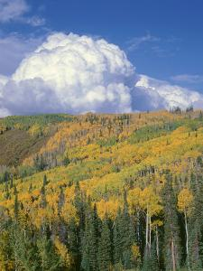 Colorado, Grand Mesa National Forest, Approaching Storm Clouds over Fall Colored Aspen and Conifers by John Barger