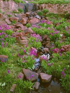 Colorado, San Juan National Forest by John Barger