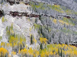 Colorado, Uncompahgre National Forest by John Barger