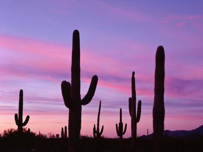 USA, Arizona, Organ Pipe Cactus National Monument