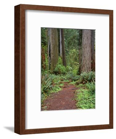 USA, California, Prairie Creek Redwoods State Park, Trail Leads Through Redwood Forest in Spring