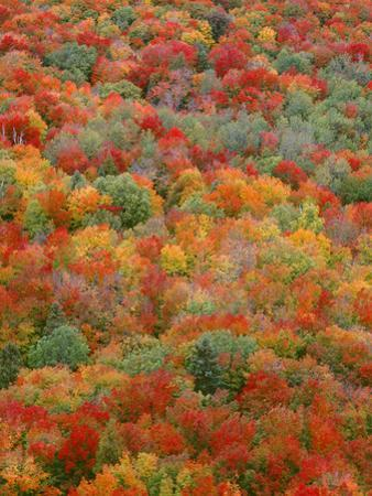 USA, Minnesota, Superior National Forest, Autumn Adds Color to Northern Hardwood Forests by John Barger