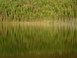 USA, Montana, Glacier National Park, Conifer Forest Reflects in Kintla Lake by John Barger