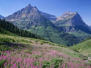 USA, Montana, Glacier National Park, Mount Oberlin and Mount Cannon Rise Beyond Meadow of Fireweed by John Barger