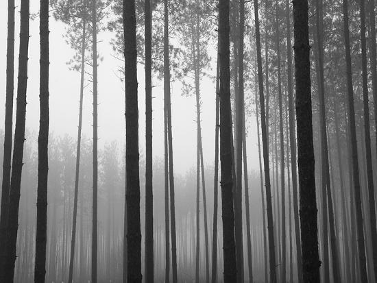 john-bartosik-fog-and-pines-i