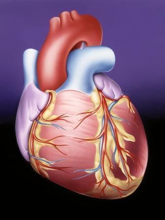 Heart, Artwork
