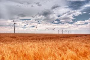 Wind Turbines in Wheat Field by John Bielick Photography