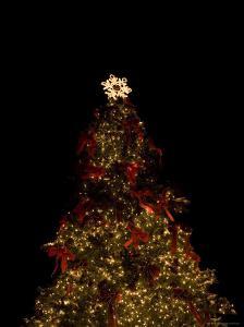 Christmas Tree at Night by John Burcham