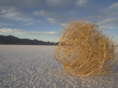 Tumbleweed on the Bonneville Salt Flats, Utah by John Burcham