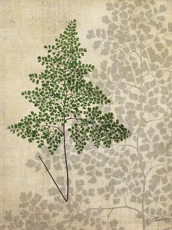 British Ferns I