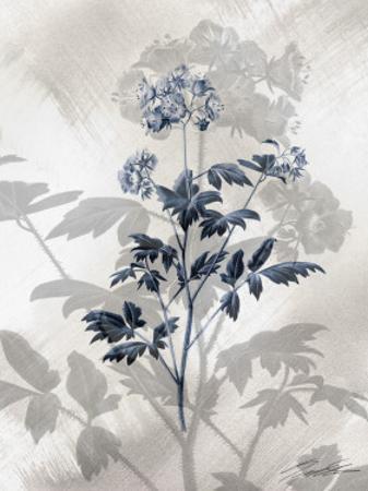 Indigo Bloom II