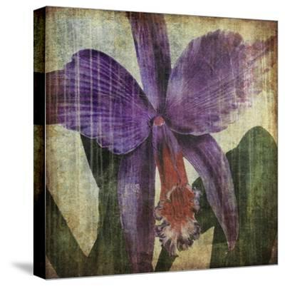 Pacific Orchid II