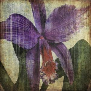 Pacific Orchid II by John Butler