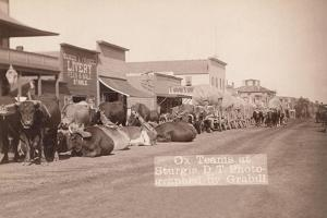 Ox Teams in the Dakota Territory by John C.H. Grabill