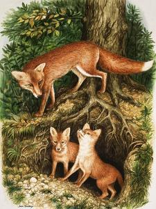 The Fox Family, Illustration from 'Once Upon a Time', 1971 by John Chalkley