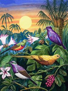 Tropical Sunbirds by John Chalkley