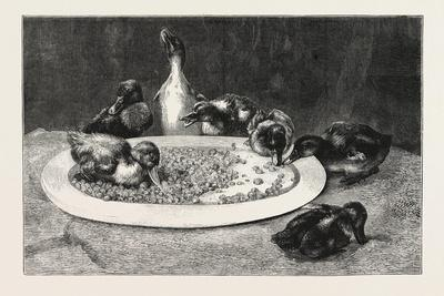 Ducks and Green Peas, 1876 Picture