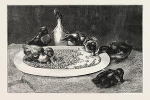 Ducks and Green Peas, 1876 Picture by John Charles Dollman