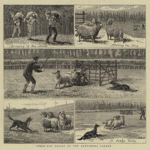 Sheep-Dog Trials at the Alexandra Palace by John Charles Dollman