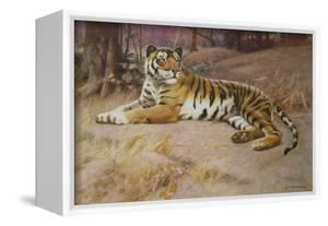 The Tiger by John Charles Dollman