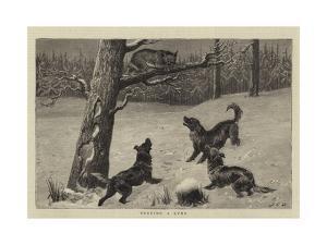 Treeing a Lynx by John Charles Dollman