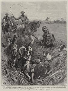 A Jackal Hunt in India, a Strange Sportsman by John Charlton