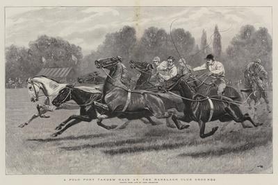 A Polo Pony Tandem Race at the Ranelagh Club Grounds