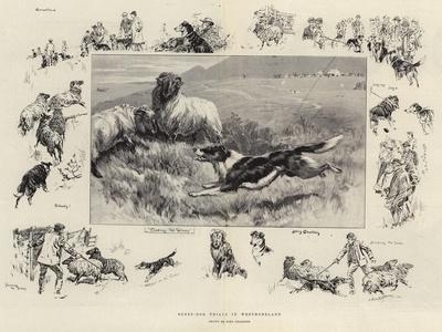 Sheep-Dog Trials in Westmoreland