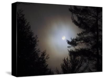 Moon with Branches at Night, Essex, Vermont