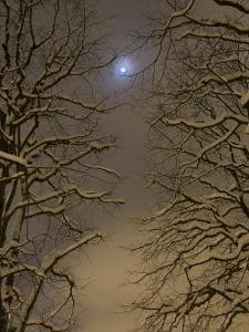 Night Image of Trees Bathed in Artificial Light from City Lights and the Full Moon by John Churchman