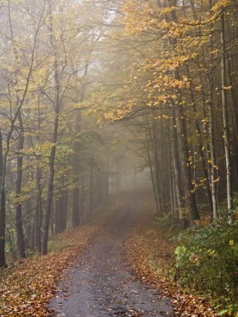 Rural Road in Autumn at Dawn, Vermont