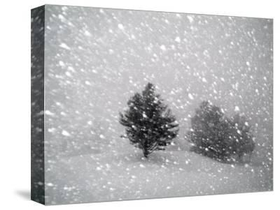 Sudden Snow Flurry