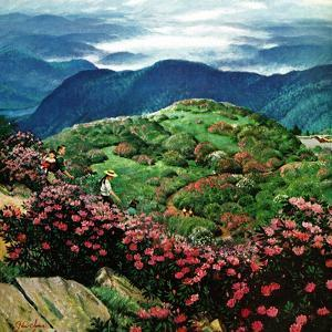 """Appalachian Rhododendrons,"" May 27, 1961 by John Clymer"