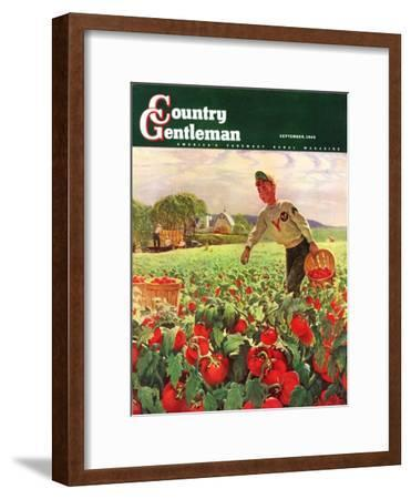 """""""Picking Tomatoes,"""" Country Gentleman Cover, September 1, 1945"""
