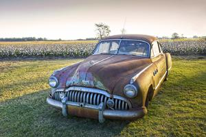 Clarksdale, Mississippi, Cotton Field, Vintage Buick Super (1950) by John Coletti