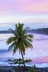 Costa Rica, Cahuita, Cahuita National Park, Lowland Tropical Rainforest, Caribbean Coast, Dawn by John Coletti