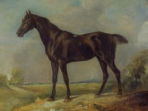 Golding Constable's Black Riding-Horse, C.1805-10 (Oil on Panel) by John Constable