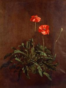 Study of Poppies by John Constable