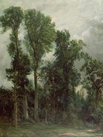 Trees at Hampstead by John Constable