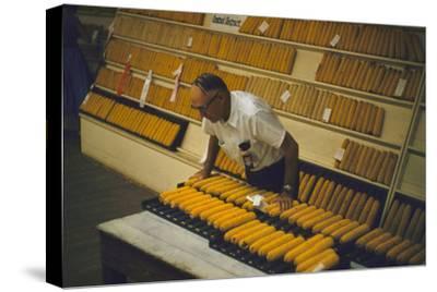 1955: at the Iowa State Fair, a Judge Examine Corn Cob Entries, Des Moines, Iowa